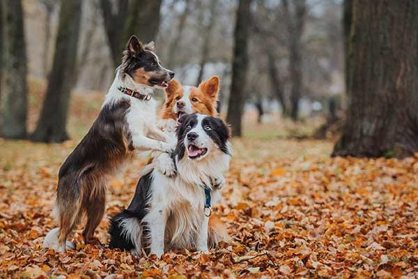 Dog Walker in Wilmslow