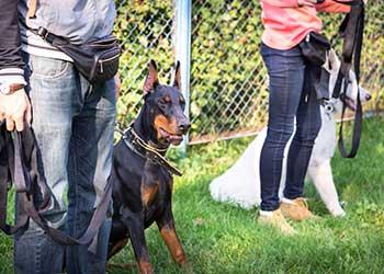 Dog Training Altrincham