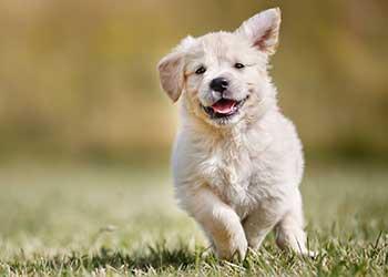 Dog Walker Altrincham