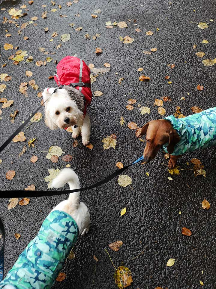 Cheshire Dog Services - Dog Walker in Bowdon
