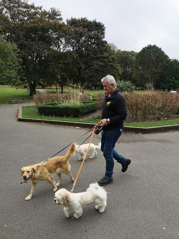 Cheshire Dog Services - Dog Walker in Hale