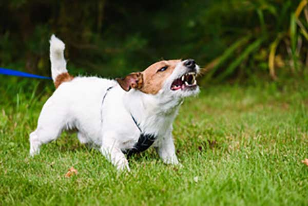 Cheshire Dog Services - Dog Behaviour Specialist in Altrincham